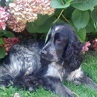 Moritz im Garten