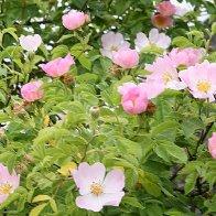 Durch das Tal der bunten Blumen
